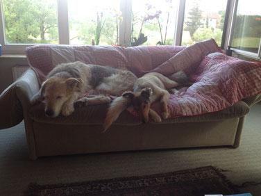 Zertifizierte Hundephysiotherapeutin, Hundephysiotherapie Augsburg