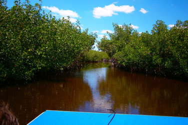 Everglades, Airboat Tour, Florida, USA