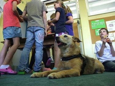 Schulhund auf Probe