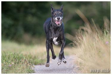 Hundetraining, Hundeverhaltensberatung, Einzeltraining, Jagdverhalten, Aggressionsverhalten, Angsthund, Problemhund