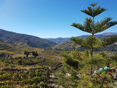 Blick auf das mit Weinbergen gesäumte Douro-Tal