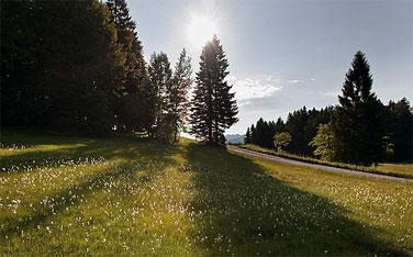 Salomonstempel in Hemberg