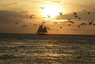 Sonnenuntergang auf Key West