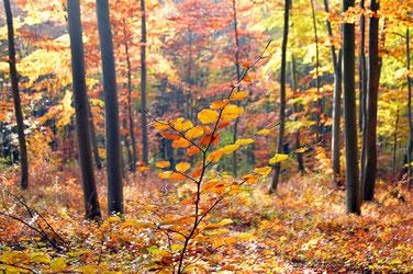 Herbstlicher Wald jugendweihe geschenk persönliche geschenke für jungs