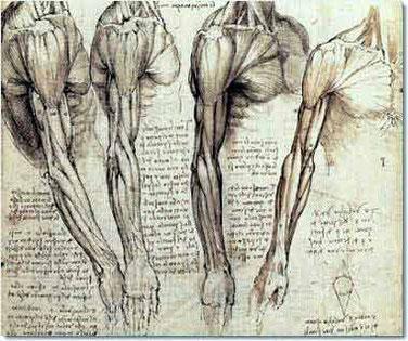 Etudes anatomiques de Léonard De Vinci (1452-1519