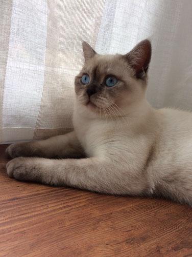 Lillyfee im Alter von ca. 6 Monaten (August 2017)