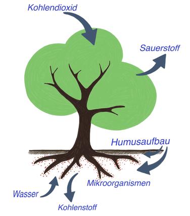 CO2-Speicherung-im-Boden