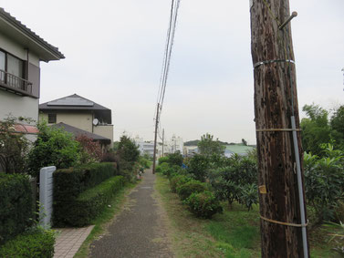 果樹の畑の傍らに木の電信柱!!
