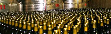 Gruppenreise Kalabrien, Besuch eines Weingutes