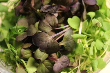 Sojasprossen Salat