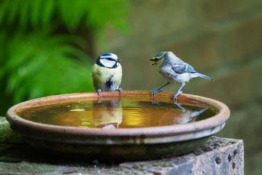 二羽の話す小鳥 conversation-3513843_1280