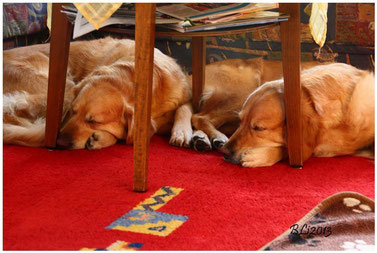 Der wahre Winterschlaf: Synchronschlaf Mutter & Tochter