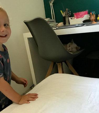 British Shorthair Katze vom Katzenzüchter. Wunderschöne Katzen brauchen keinen Filter