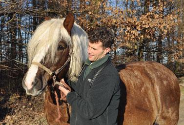Palpation (Abtasten) der Lymphknoten bei einem Pferd