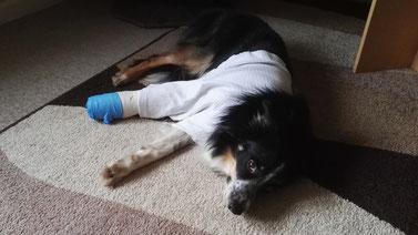 Arthrodese OP Hund