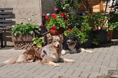CASSY from the wild crowfoot und DUNCEN von der Segeberger Heide