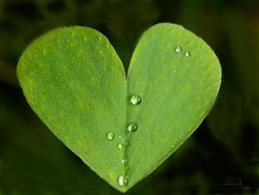 Meditationen - Grünes Blatt