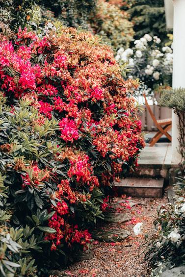 花がたくさんある庭