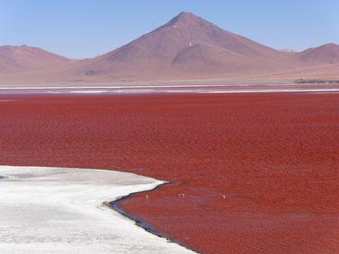 Die unglaubliche Laguna Colorada, Bolivia (Foto Jörg Schwarz)