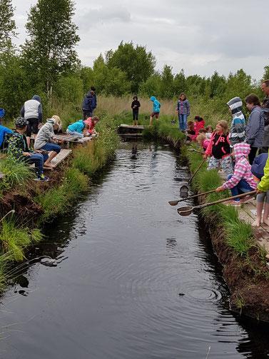 Sachunterricht naturnah: Erkundung der Tier- und Pflanzenwelt im Moor.