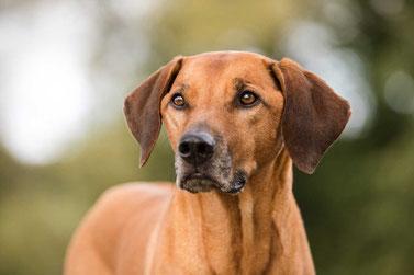 Chiropraktik Hund und Pferd Tierarzt Leuthard
