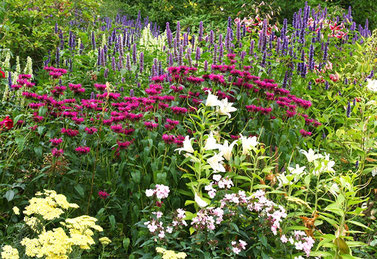 herbaceous plants are mostly easy to grow and look good