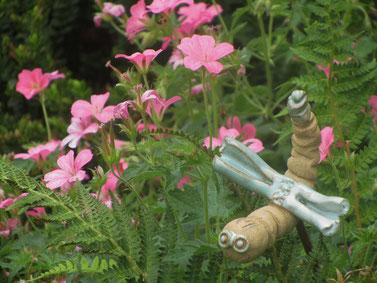 "Geranium oxo. 'Wageningen' et ""Bellulle"""