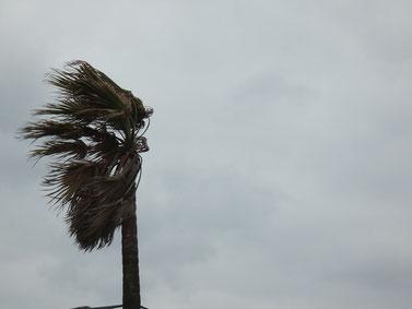 ヤシの葉の傾きで風の強さは分かってもらえるはず(笑)