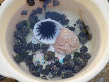 自称小さな水族館!作っていたZNZO。さっきかなり脱走していたよ~ 一応戻しておきましたが、朝まで残ってるかな??