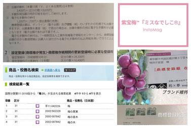 紫宝梅™『ミスなでしこ®』商標申請【2018】