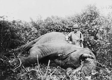 """Theodore Roosevelt. Questo sacco di merda è stato il 26º presidente degli Stati Uniti e ha ricevuto il Premio Nobel per la pace! Paradossalmente definito dagli Americani il """"grande nostro presidente ambientalista"""" !!!"""