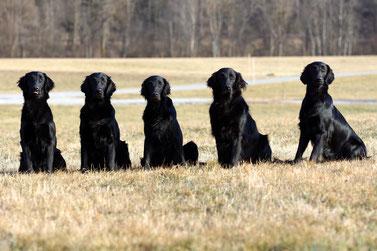 meine Mädels: von links: Lila,Choice,Lilly, Gillian und Alika