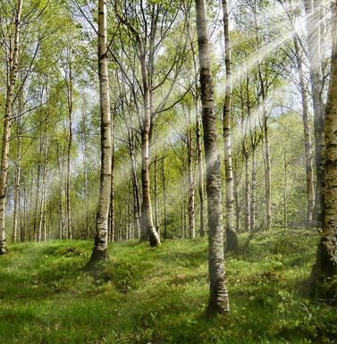 Firmenevent im Wald, Waldaktiv, Waldbaden, Wald