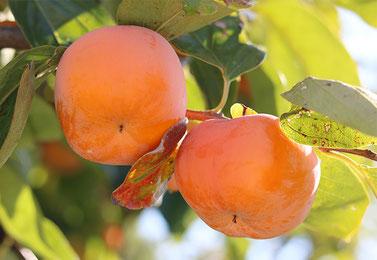 ブルームに覆われた美味しい柿