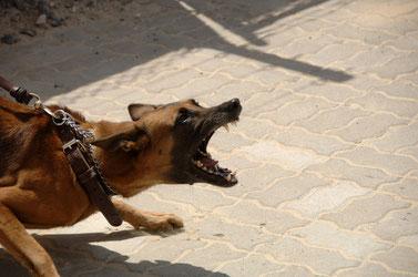 Angst Aggression - Hund ist unsicher &  überfordert