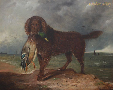 Voorouder van de Golden Retriever: de Tweed Waterspaniel