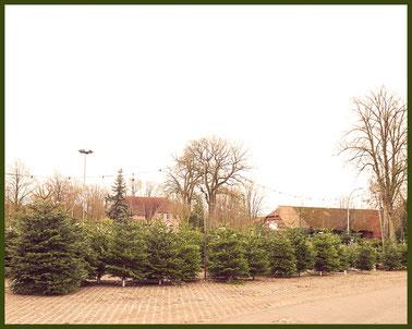 Forsthof Prüser Hofverkauf - Regionale Weihnachtsbäume