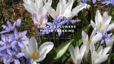 Delphicaphoto Photo Trekking Valsassina- Grigna's flowers