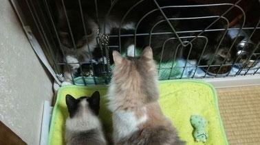 ミンミちゃん、なんで入ってるのさ~!(チャム&ヴィヴィ)