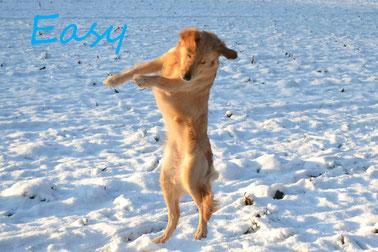 Easy wird demnächst zum Ballett angemeldet ;))