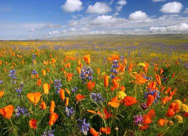 Le printemps de l'âme