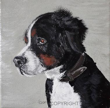 Hundeporträt: Bernersennenhund, Tiermalerei, gemalte Tierportraits nach Fotovorlage, Tiere zeichnen lassen