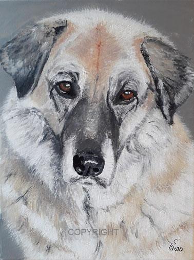 Hundeporträt: Mischling, Tiermalerei, gemalte Tierportraits nach Fotovorlage, Tiere zeichnen lassen