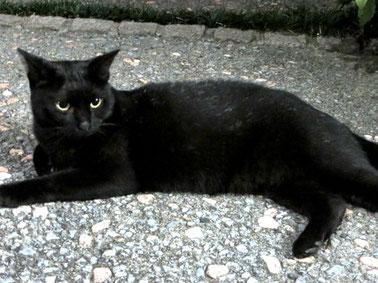 江古田、オイルライフ、黒ネコ