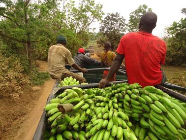 Laster mit Arbeitern und Bananen.