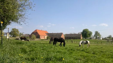 Weide, Pferdeweide, Gruppenhaltung