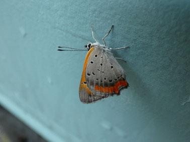 蝶々は粉なのか、毛なのか?!
