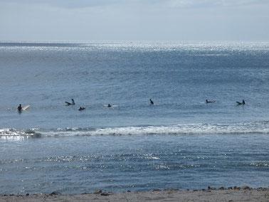 南東寄りのうねりが回り込んで少し波アップしました! 初海デビューの5歳KIT君もご機嫌でしたよ~