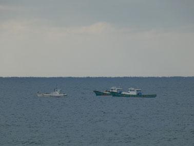今日はちりめん漁が盛んでした。