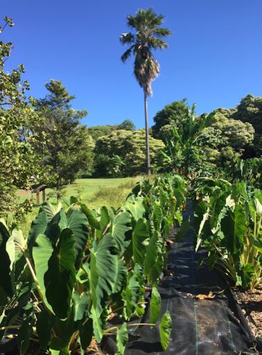 Amy Greenwell Garden Hawaii